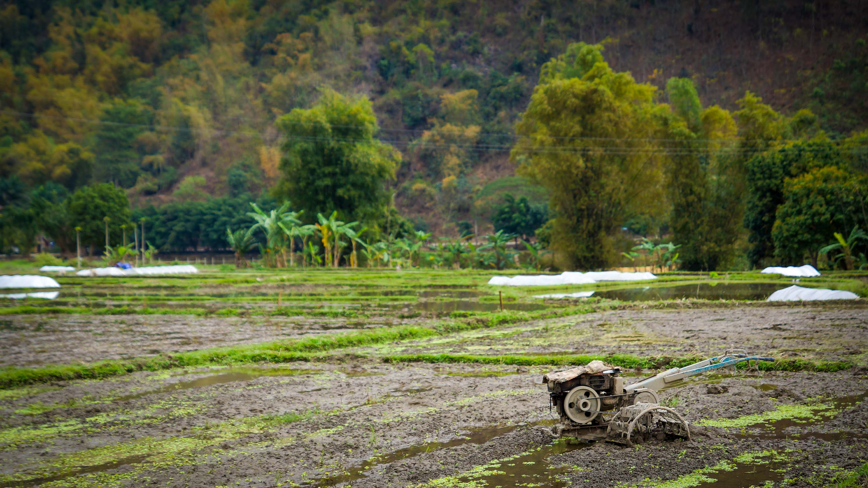 Rudern, Reparaturen, Reis und Regen