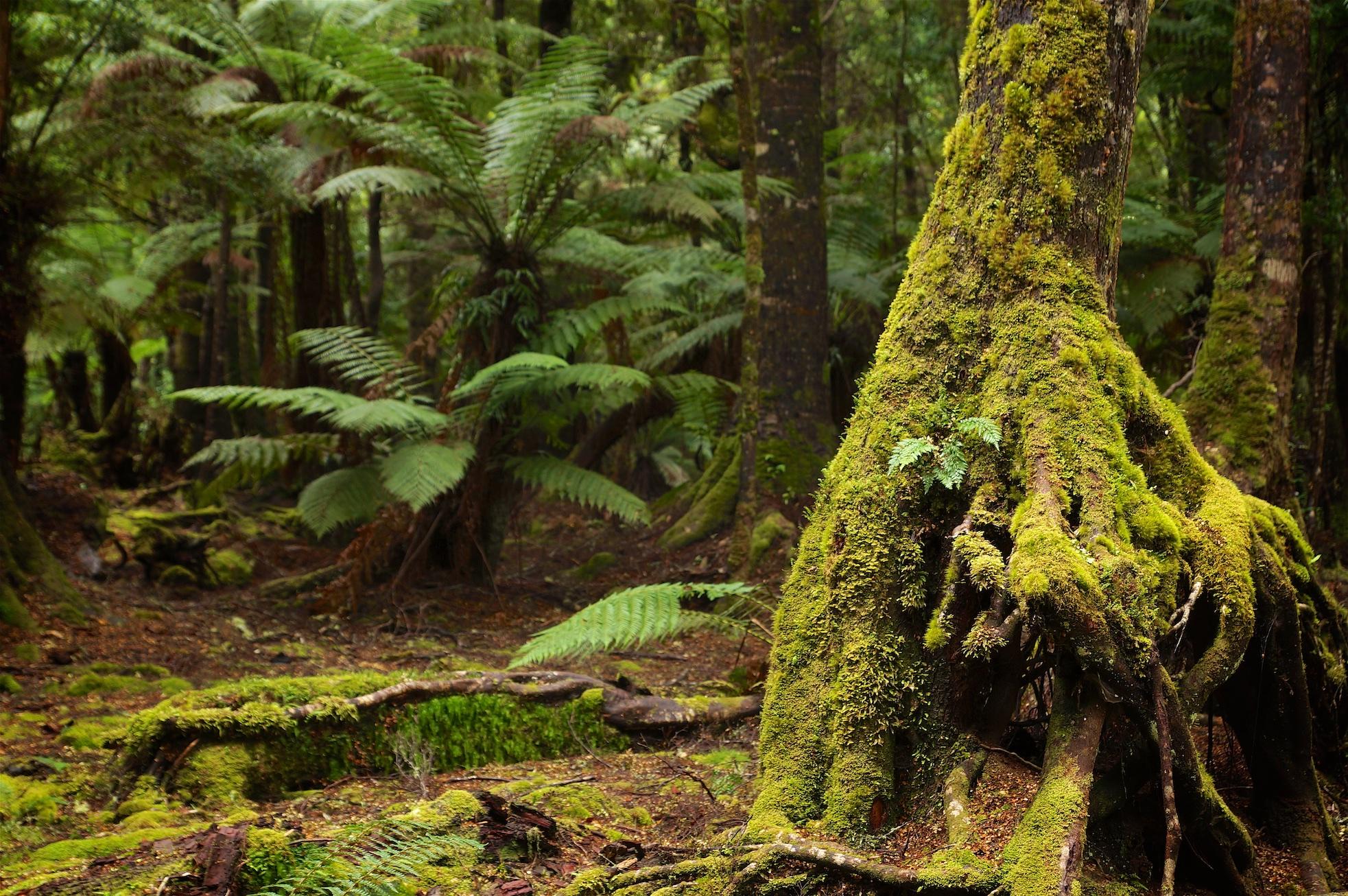 Tasmanien Teil zwei